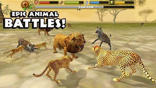Cheetah simulator