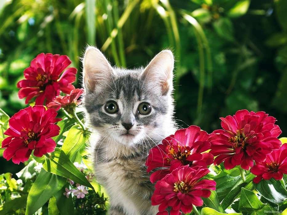 Открытки животные и цветы 96