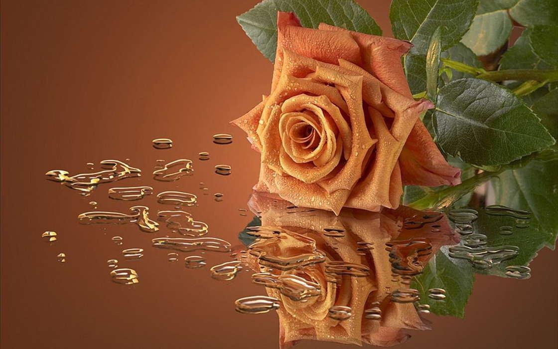 Открытки для мужчин цветы 36