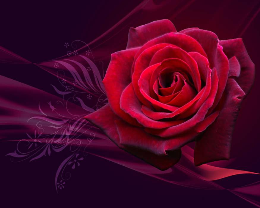 Скачать картинку на телефон: растения, цветы, розы, букеты.