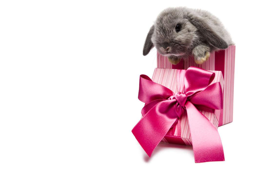 В подарок животное 32