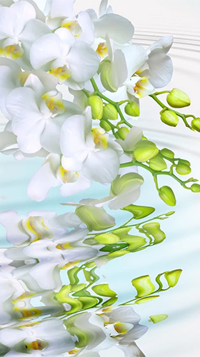 Orchid by Creative Factory Wallpapers